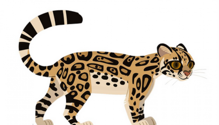Margay_AM.PNG